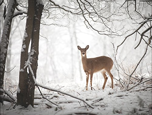 Doe in the Forest Large Embellished Holiday Notecards