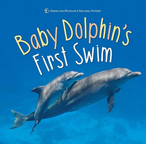 Baby Dolphin's First Swim (First Discoveries)