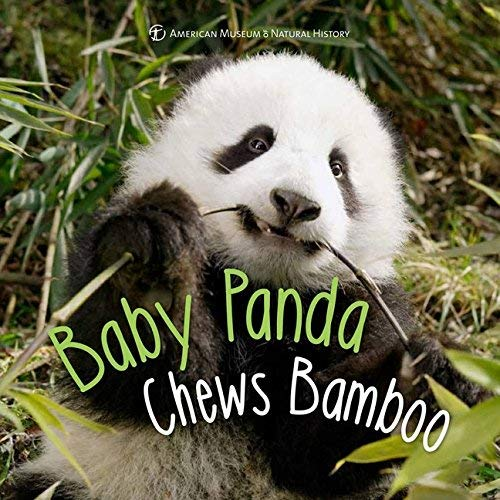 Baby Panda Chews Bamboo (First Discoveries) (Hardcover)