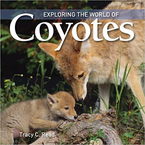 Exploring the World of Coyotes (Exploring the World of)
